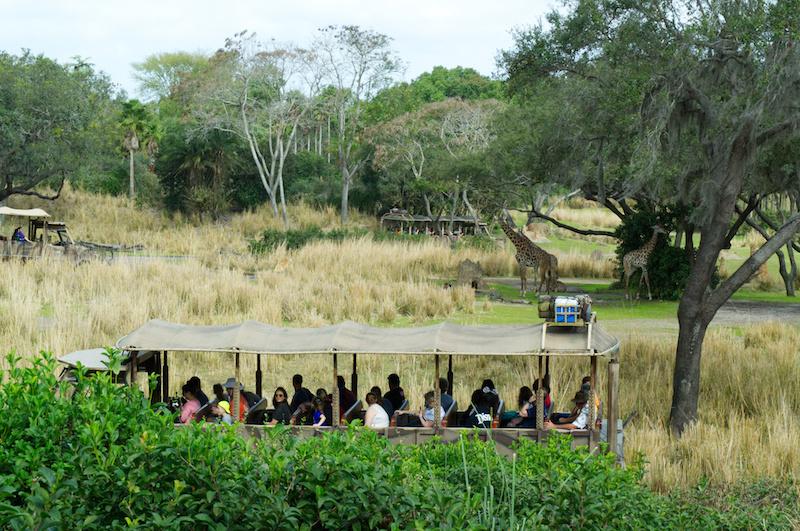 Die Savanne mit Giraffen in Animal Kingdom