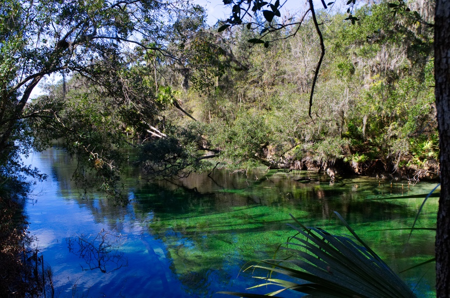 Das spiegelnd-blaue Wasser des Blue Springs State Park in Florida