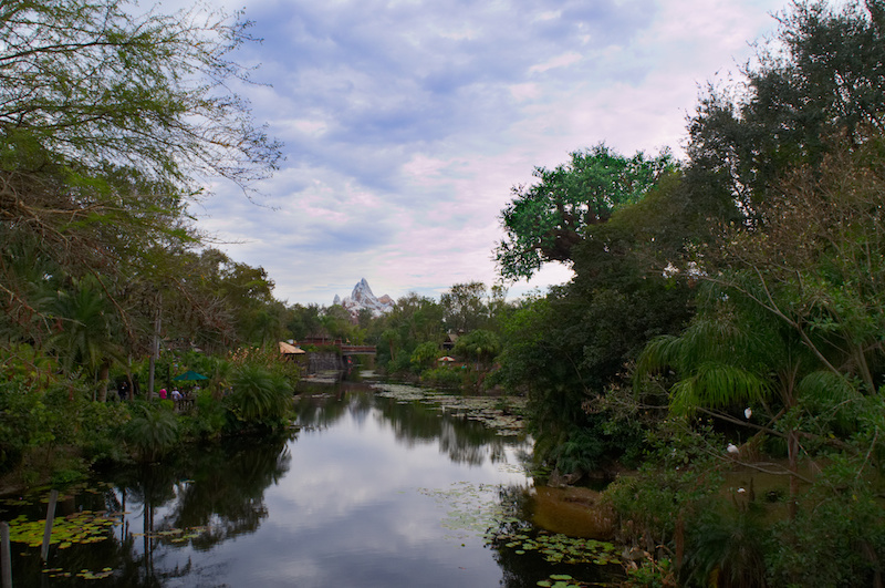 Der Tree of Life und Expedition Everest in Disney's Animal Kingdom
