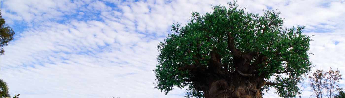 Der Tree of Life in Disney's Animal Kingdom