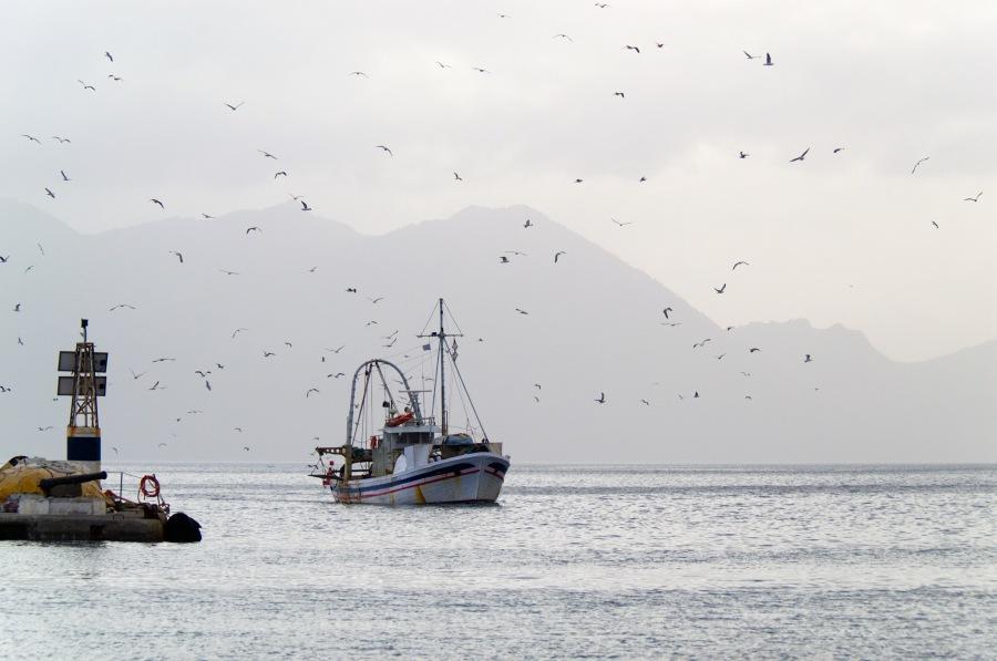 Ein Fischerboot kehrt von Möwen umkreist heim in den Hafen von Ägina
