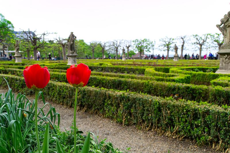 Im Rosengarten mit Blick über Bamberg