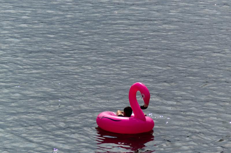 Ein einsamer Gummiflamgo auf der Donau