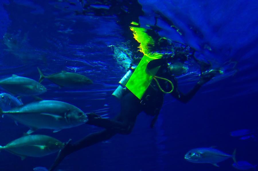 Ein Taucher in Epcots Aquarium The Living Seas