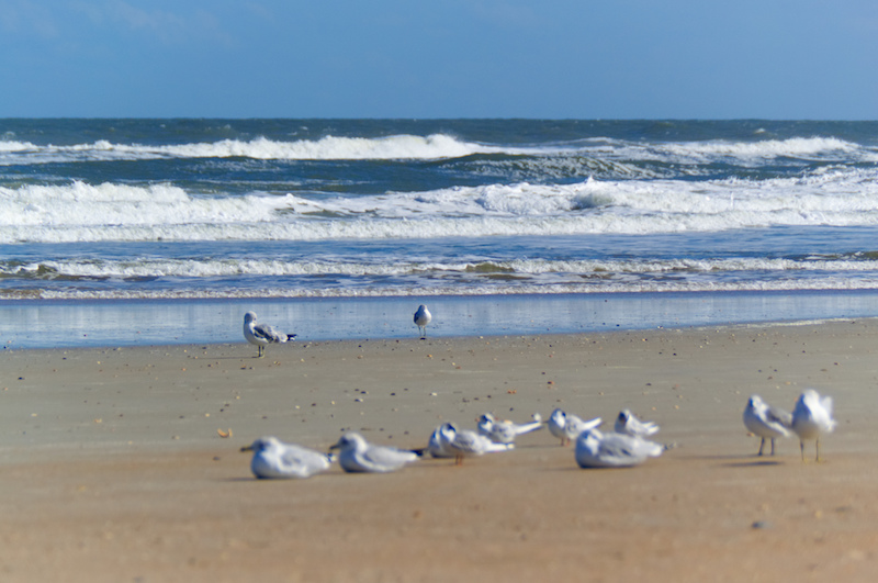 Möwen rasten am Strand von St. Augustine