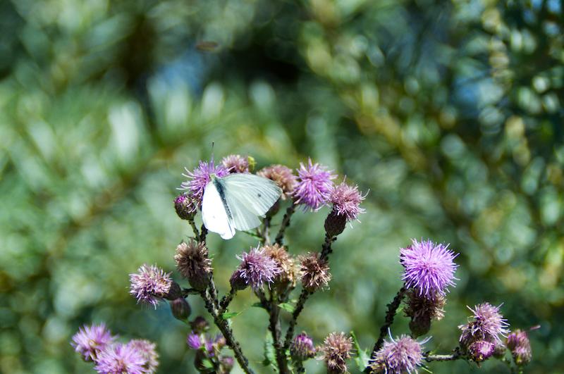 Ein Schmetterling auf einer Blüte