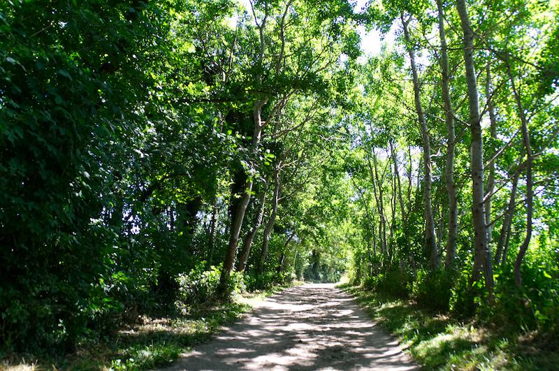 Waldweg in der Nähe von Travemünde