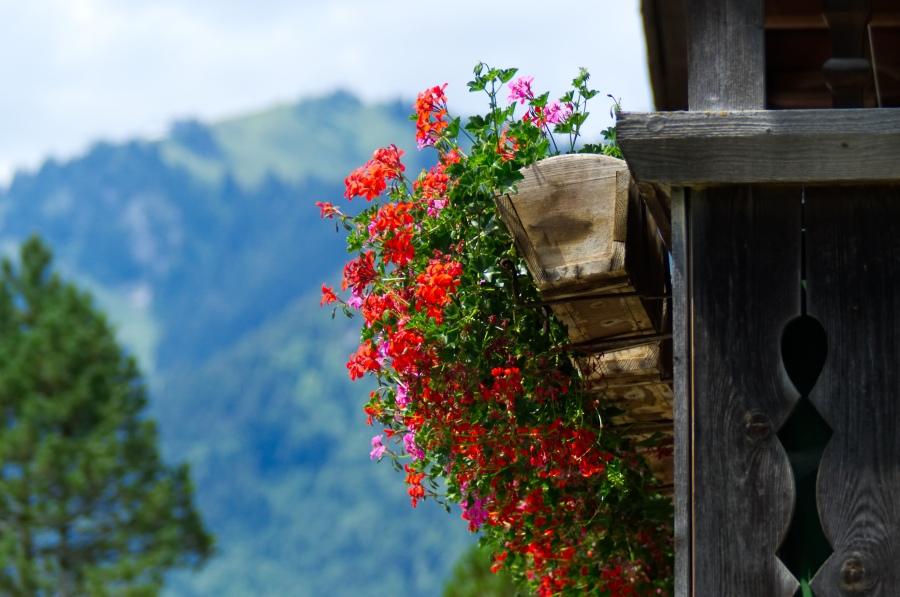 Geranien an einem Bauernhaus in Bayern