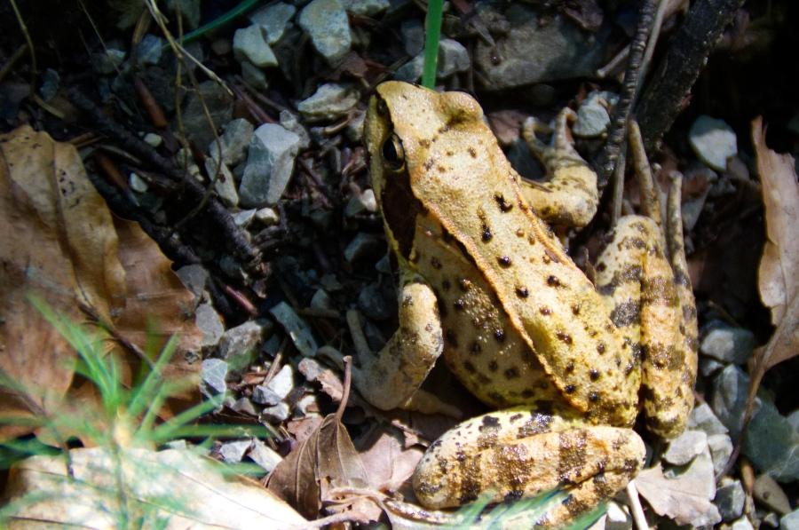Ein Frosch im Wald