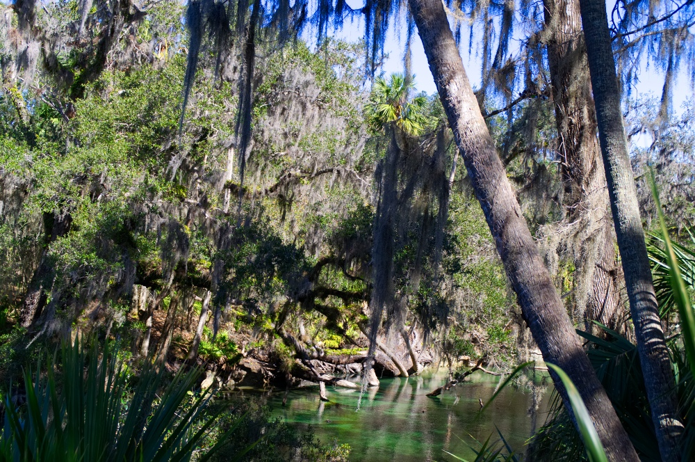 Ursprüngliche Wälder in Florida's Blue Springs State Park