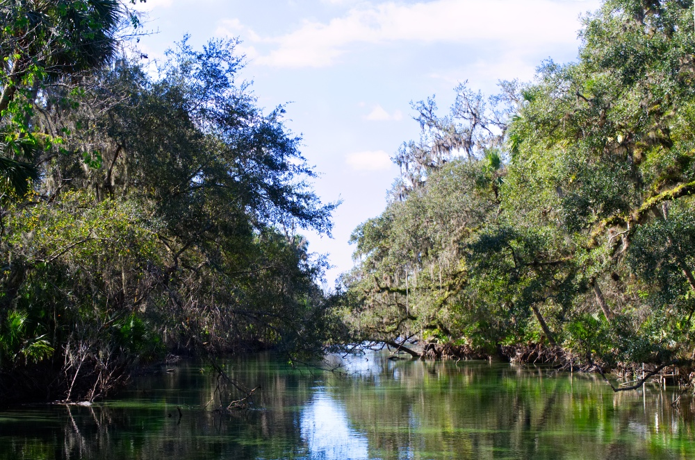 Bäume umrahmen den Fluss im Blue Springs State Park