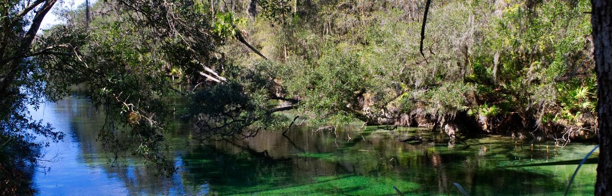 Wald und Fluss im Blue Springs State Park