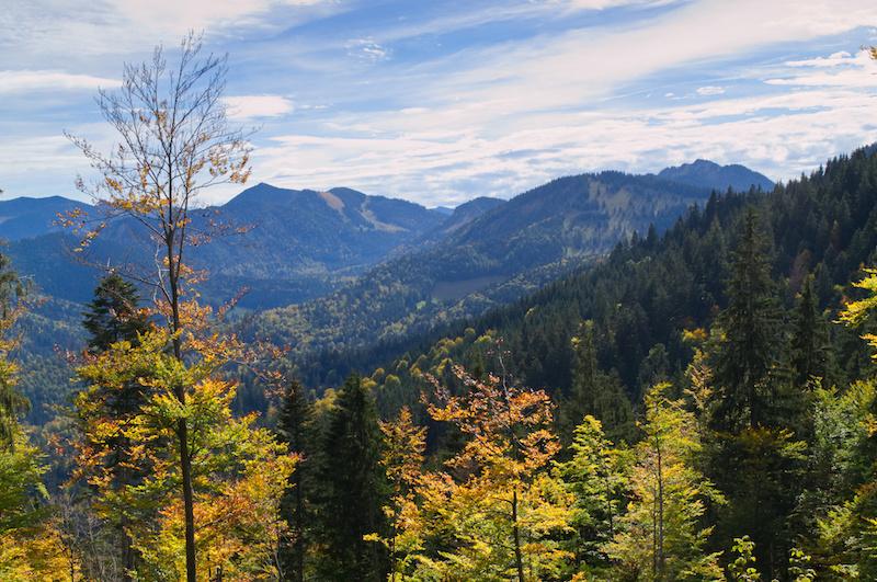 Herbstlaub auf den Berghängen rund um die Gindelalm