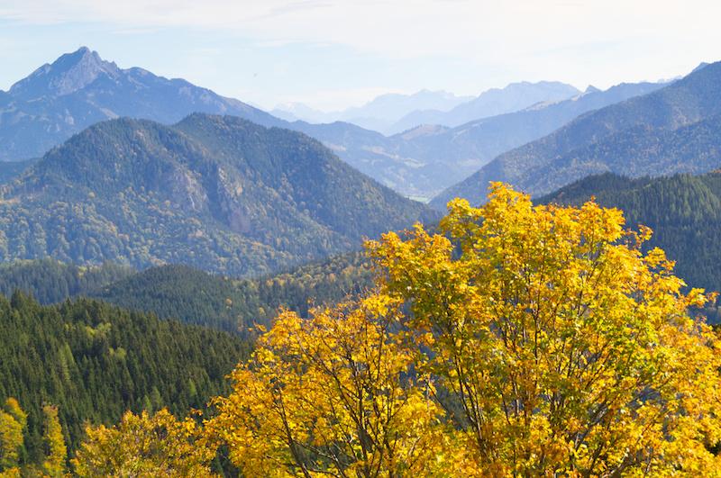 Goldener Laubbaum vor Bergpanorama