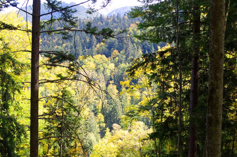 Herbstlicher Bergwald bei Schliersee