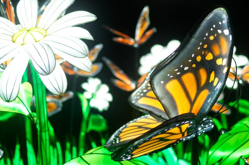 Eine Blumenwiese mit Schmetterlingen - alles Laternen