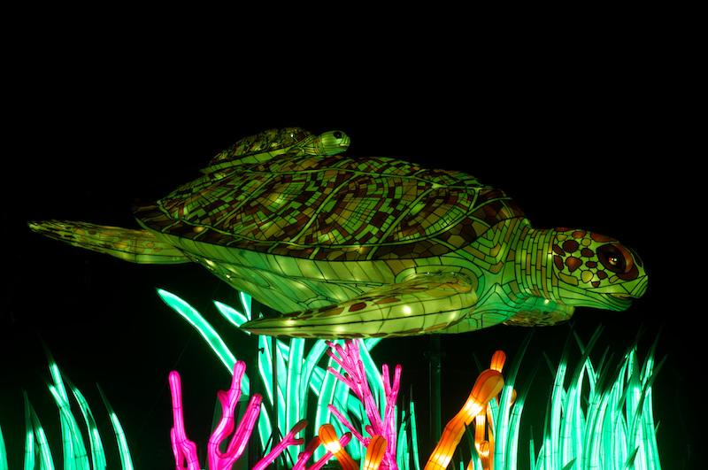 Eine Riesenschildkröte