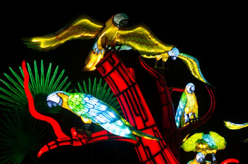 Aras leuchten im Jardin des Plantes