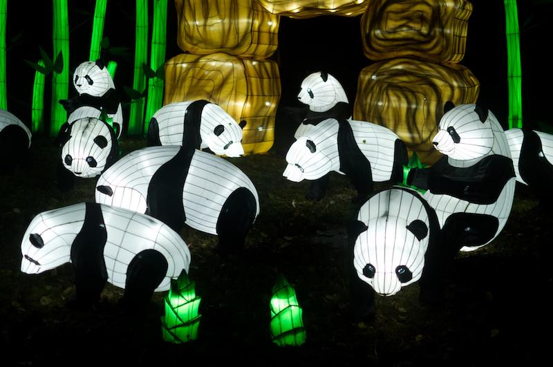 Pandas leuchten im Jardin des Plantes