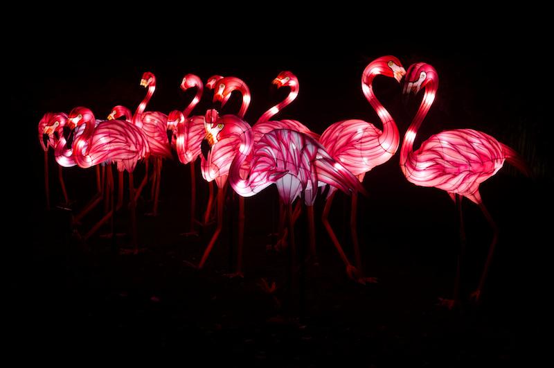 Rose Flamingos im Jardin des Plantes