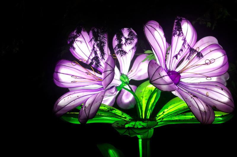 Blumen-Laterne