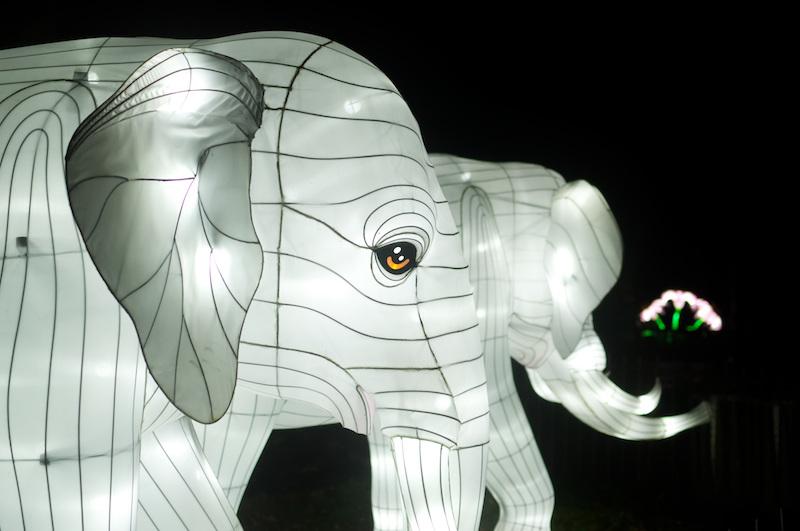 Weiße Elefanten, hell beleuchtet, im Jardin des Plantes
