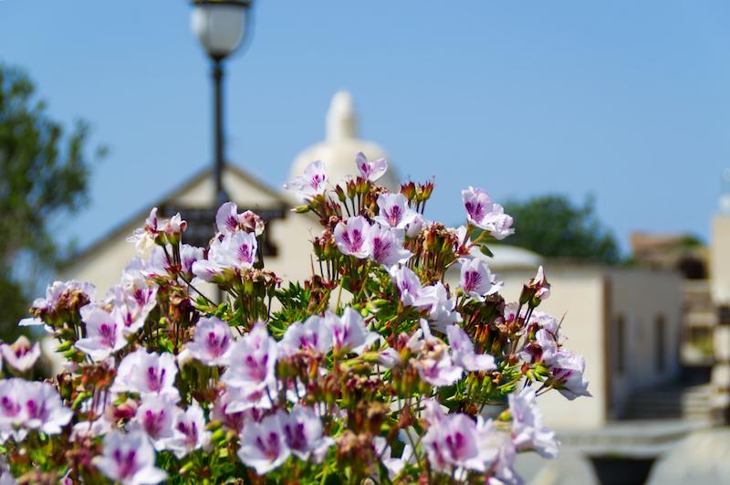 Blumen und kleine Kirche