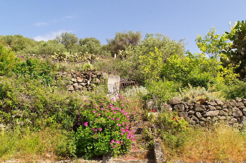 Ein verwilderter Garten