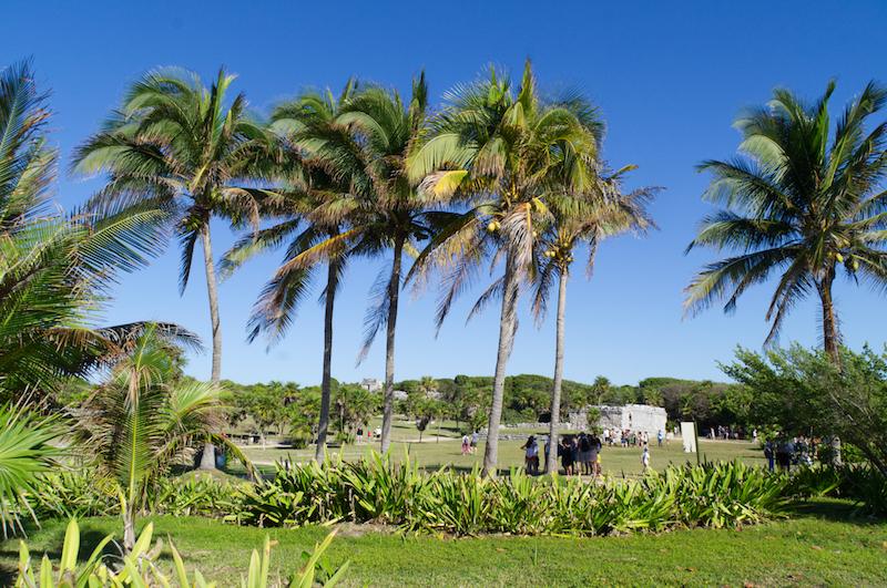 Das Zentrum des Maya-Tulum sieht heute aus wie ein Park mit Palmen