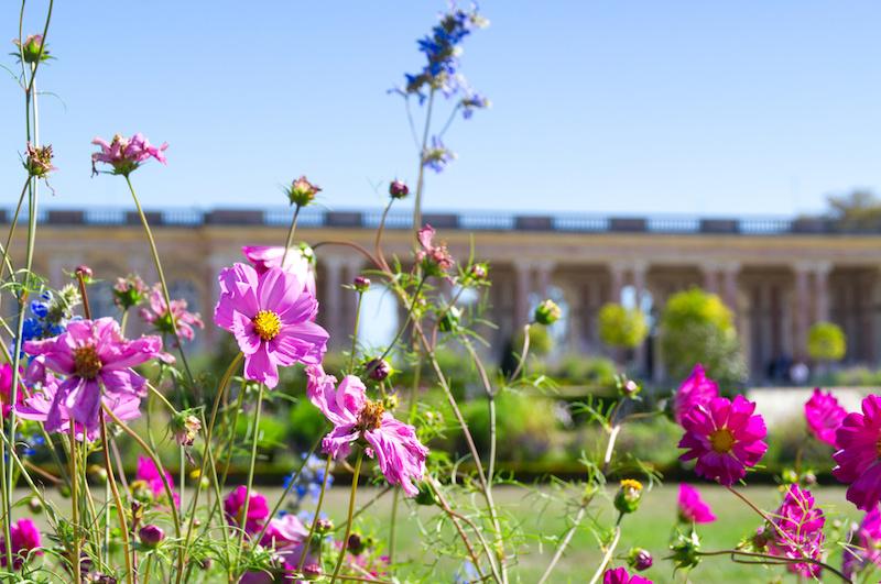 Blühende Gärten im Palast der Marie Antoinette