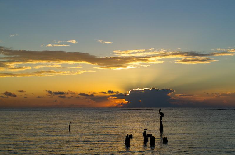 Sonnenaufgang mit Pelikan - weiterer Winkel