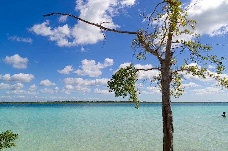 Blaues Wasser und blauer Himmel mit Baum in Bacalar