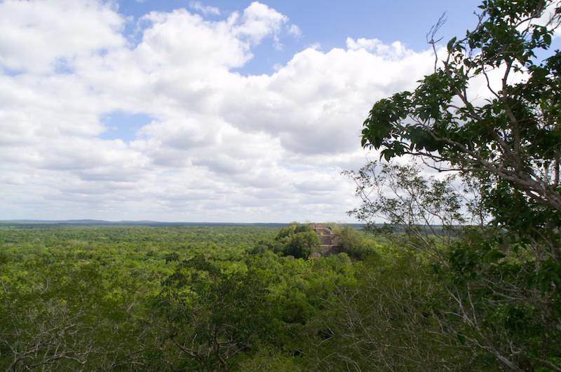 Eine Pyramide lugt aus dem Wald von Calakmul hervor