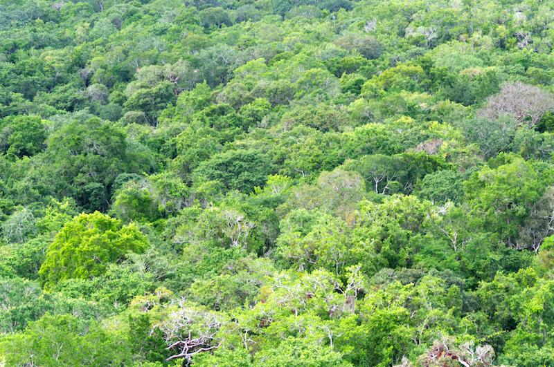 Blick über grüne Bäume im Dschungel von Yukatan