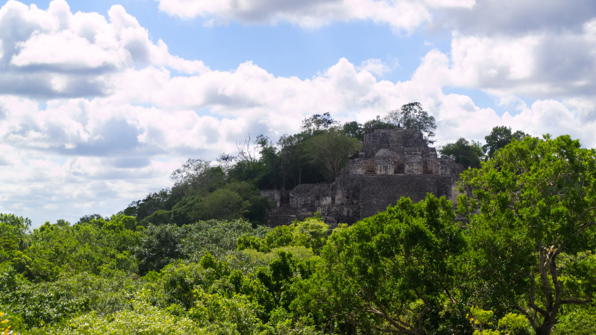Von Wald überwucherte Pyramide in Calakmul