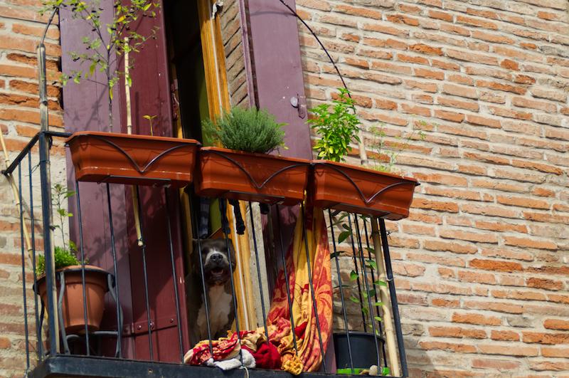 Ein Hund blickt von einem Balkon herunter