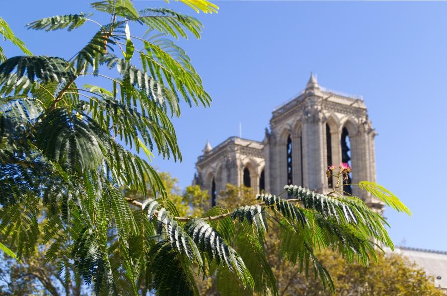 Die Türme von Notre Dame