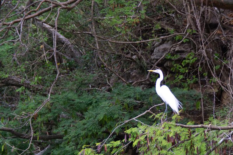 Ein weißer Reiher in den Bäumen