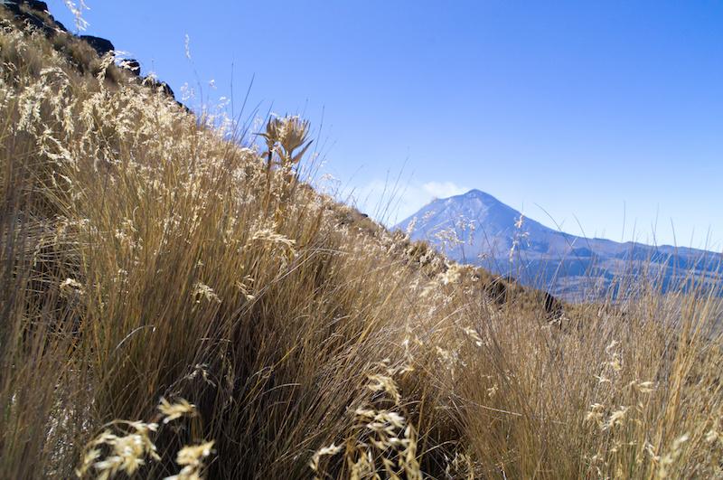 Gras an den Hängen des Iztaccihuatl