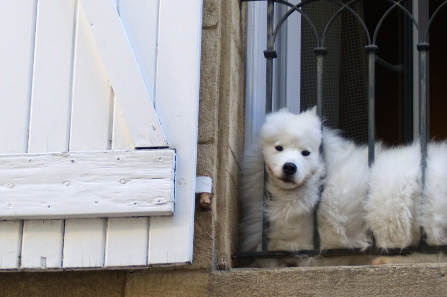 Hund kuckt aus Fenster