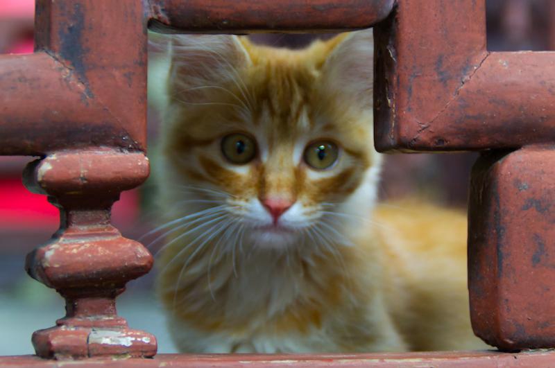 Eine Katze in den Yuyuan Gärten