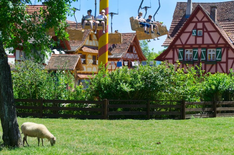 Schafe grasen in Tripsdrill