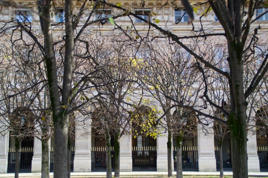 Bäume im Garten des Palais Royal