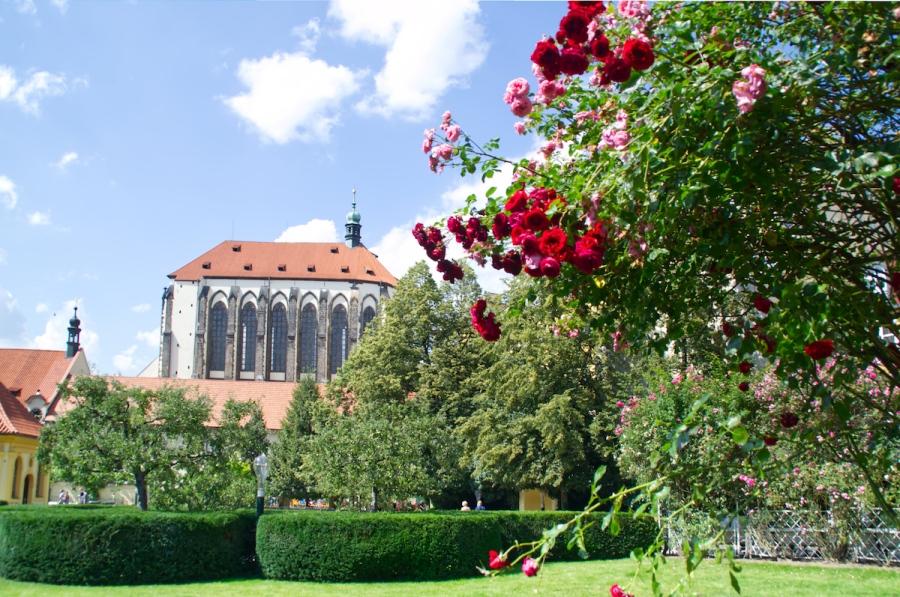 Rosenbusch im Franziskanergarten