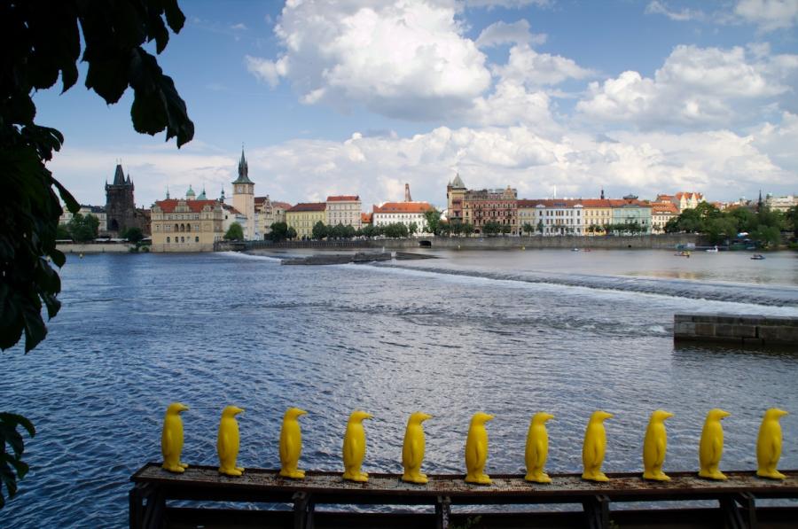 Gelbe Pinguine stehen am Ufer der Moldau in Reih und Glied