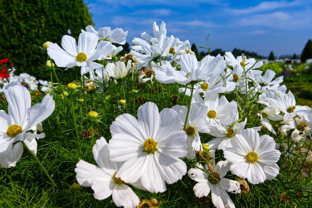 Blumen im Garten vor dem Schloss